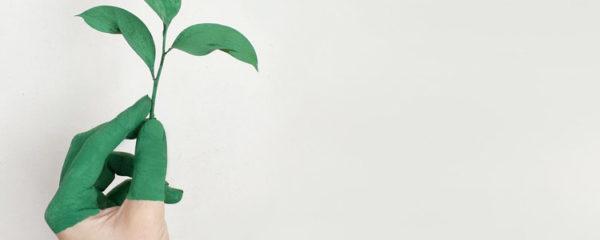 Main Gauche Tenant Une Plante à Feuilles Vertes